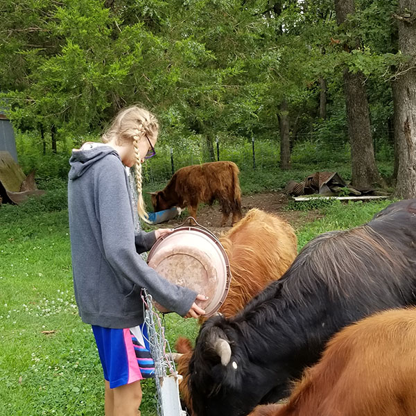 Sophomore Nicole Say feeds her Highland cattle. Say raises the animals for her Supervised Agricultural Experience project.