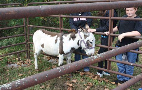 Elementary children pet the donkey named