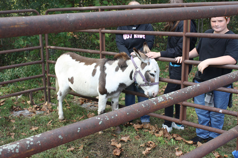 Elementary+children+pet+the+donkey+named+%22Donk.%22+The+donkey+was+brought++by+senior+Savannah+Neth.+