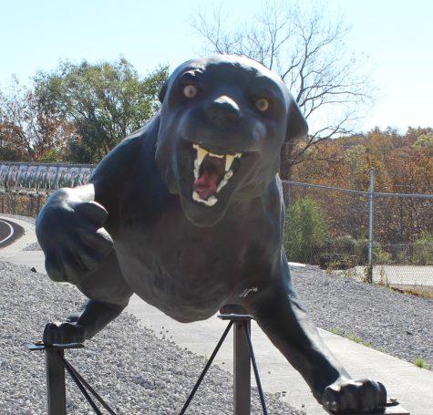 Wildcat restored