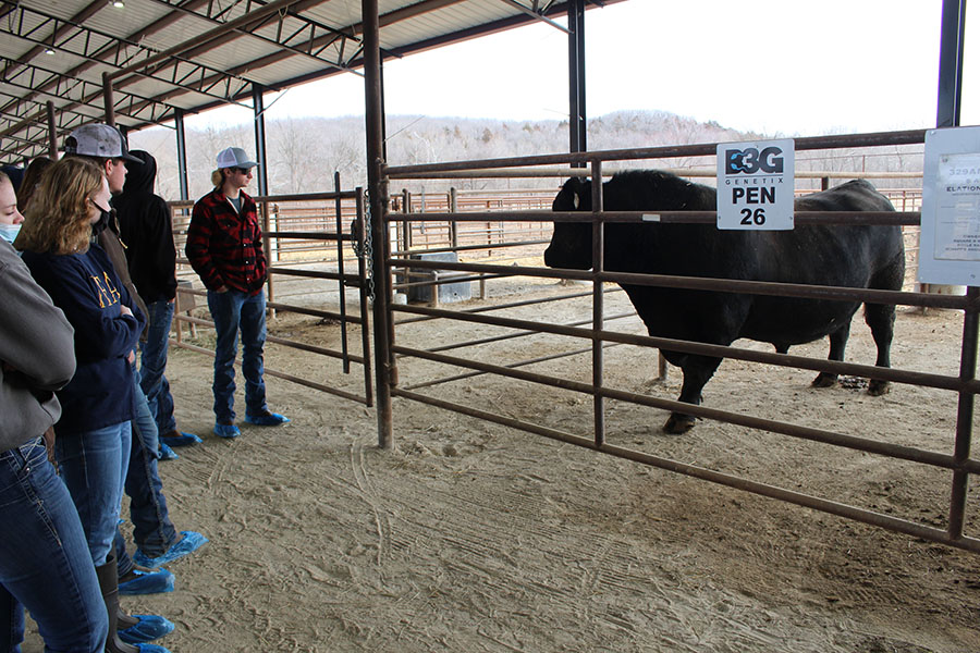 FFA members observe the prize bull, Elation, at B3Genetix in Warsaw. They had to wear plastic booties over their shoes so as not to bring any contaminants into the barn.